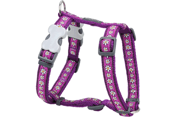 Postroj pro psa XL Red Dingo 25mm/71-113cm - vzor : Daisy Purple